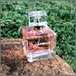 Основные типы парфюмерных ароматов