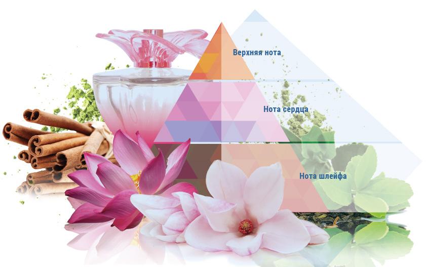 Что такое парфюмерная пирамида и как правильно выбирать духи с феромонами по интернету